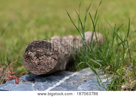 Trunk of wood on a rustic stone with grass on the background