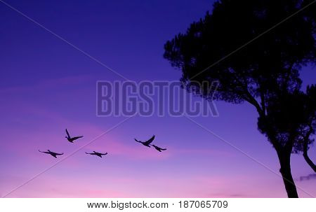 Birds at sunrise or sunset nature concept panoramic view