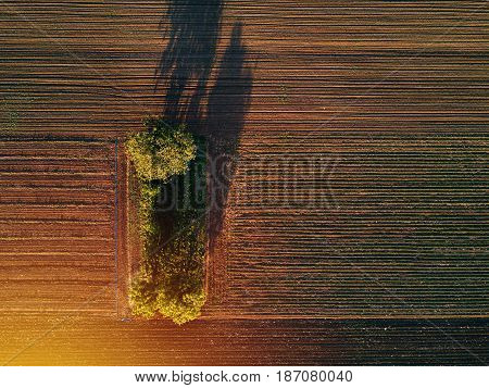 Aerial view of trees in field in sunset drone pov top view of countryside landscape