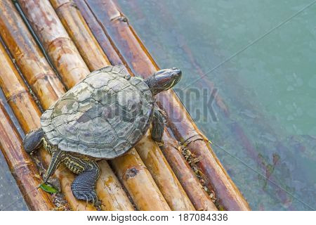 One turtle is floating on floats and natural