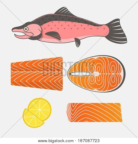 Salmon fish and salmon meat on white background. Fresh raw salmon steaks and fillet. Vector illustration