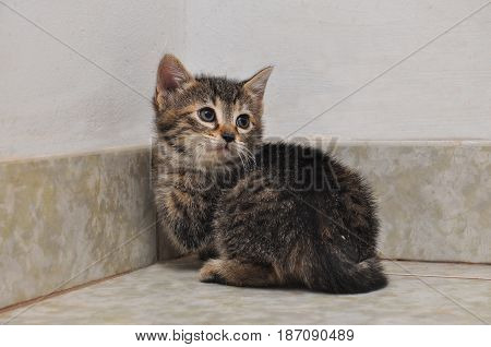 Little gray kitten on the stairs. Little kitty play inside the house