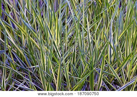 Green background of long grass in the garden