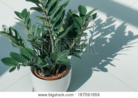 Potted Plant In White Vase At Empty Room With Daylight