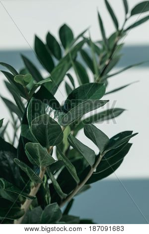 Close Up Of Green Potted Plant At Empty Room With Daylight