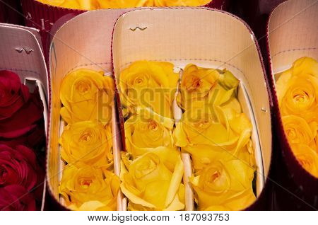 Bunch of beautiful dozens of blossoming yellow and red roses bouquets.