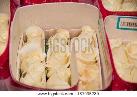 Bunch of beautiful dozen of blosoming white rose bouquet .