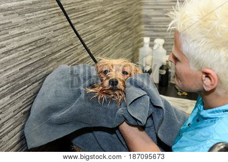 Canine Hairdresser In A Beauty Clinic With Dog