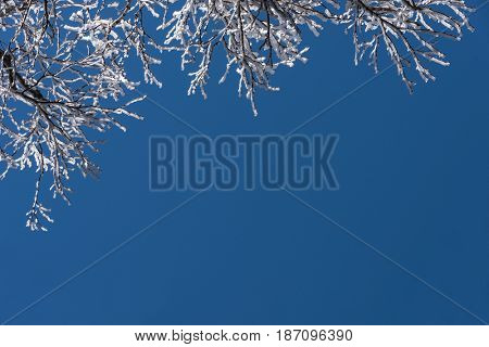 Winter natural view of winter frosty tree against blue sky landscape.