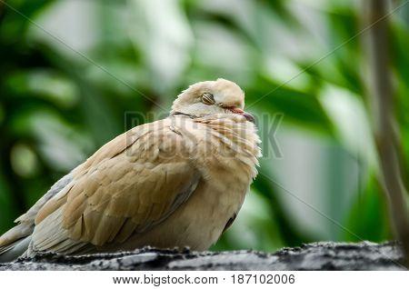 Sleeping white bird on branch with blurred green background