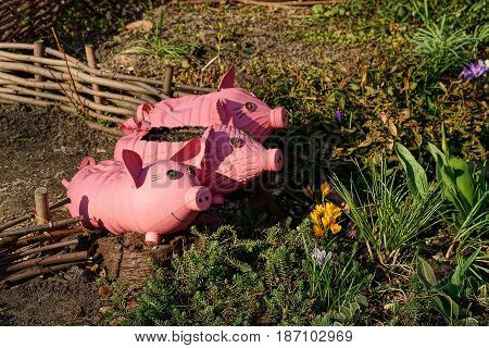 Pink pigs from plastic bottles in the form of flowerpots on a flower bed