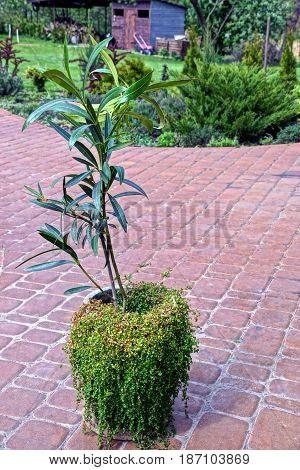 A grassy vase with a large plant on the sidewalk in the courtyard