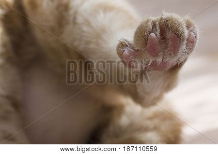 Cat claw with extended sharp claws macro