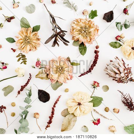 Dried flowers texture: beige peony protea eucalyptus branches roses on white background. Flat lay top view. Floral background