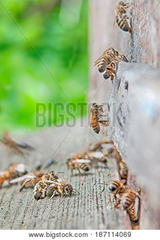 a bees in beehive. A close up
