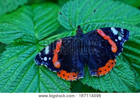 beautiful butterfly on a green sheet in a garden