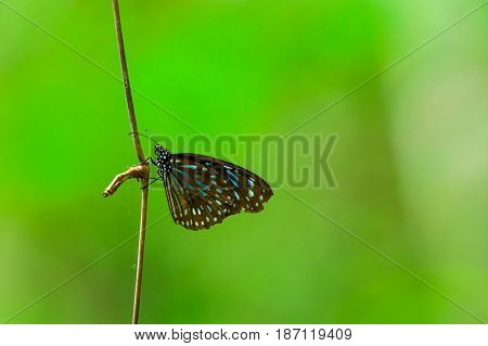 Butterflies Are Hanging On A Branch.