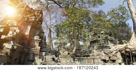 Jungle tree covering the stones of the temple in Angkor Wat (Siem Reap Cambodia)