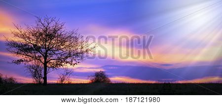 Website banner of a tree with blue sky and clouds