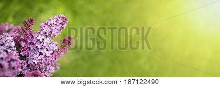Website banner or greeting card idea of beautiful purple flower