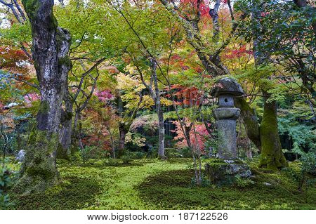 Kasuga Doro Or Stone Lantern In Japanese Maple Garden During Autumn At Enkoji Temple, Kyoto, Japan