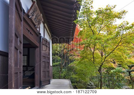 Kyoto Japan - November 2016: Japanese red maple tree during autumn in garden at Enkoji temple in Kyoto Japan