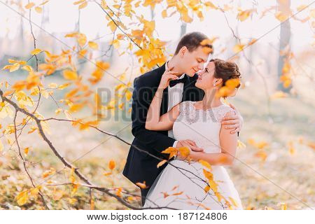 Autumn composition of the smiling newlyweds hugging among the yellowed leaves
