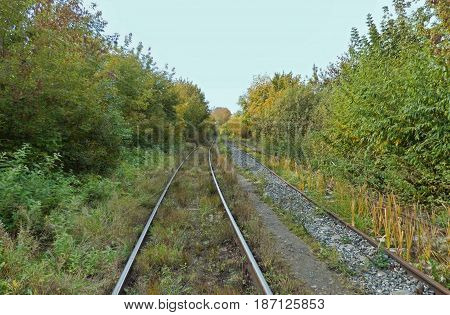 Two railways receding to the horizon. Railway tracks perspective with trees along. Soft focus.