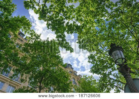 Uprisen angle of a Clouded sky with green leaves in the foreground at Champs-Élysées Avenue on May 1 2017 in Paris France.