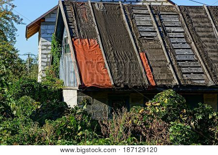 Part of the roof of an old rural house in a thicket of plants