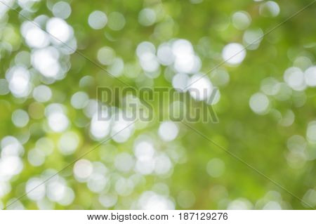 Blurred nature background / green and white background from tree in sun light.