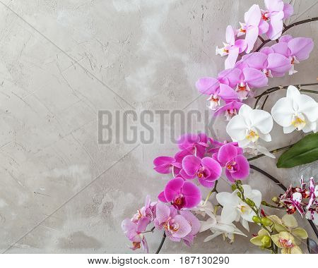 Textured Background With Variety Of Phalaenopsis Flowers