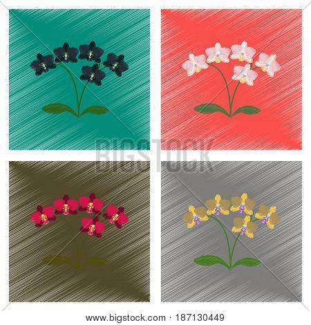assembly flat shading style illustration of flower orhidaceae
