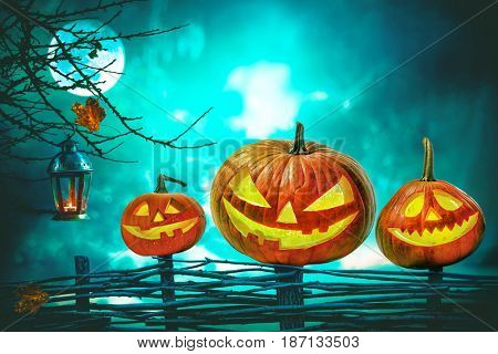 Halloween pumpkins in front of nightly spooky forest background