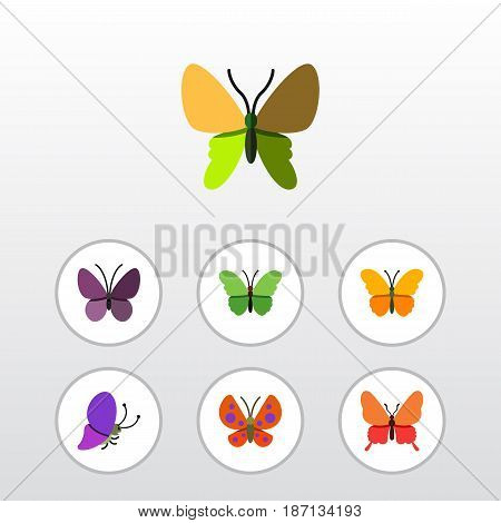 Flat Monarch Set Of Milkweed, Danaus Plexippus, Summer Insect And Other Vector Objects. Also Includes Monarch, Moth, Milkweed Elements.