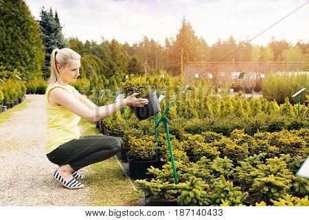 woman choosing ornamental conifer tree at outdoor plant nursery