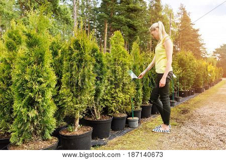 woman choosing thuja tree at outdoor plant nursery