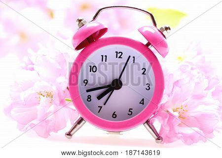 Clock Of Pink Colour Placed Among Pink Blossom Of Sakura