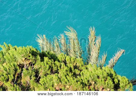 Top of fire tree and palm against background of blue sea
