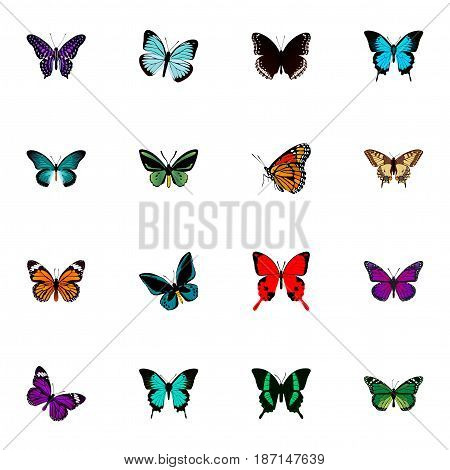 Realistic Demophoon, Spicebush, Sangaris And Other Vector Elements. Set Of Butterfly Realistic Symbols Also Includes Hairstreak, Brown, Tiger Objects.