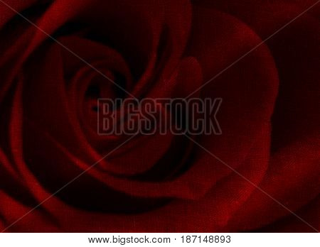 Abstract red rose background. Rose background. Red background. Love background. Passion background.