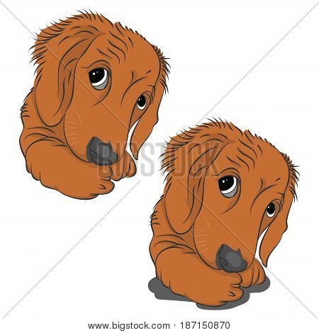 Head of a cute puppy on white background vector illustration