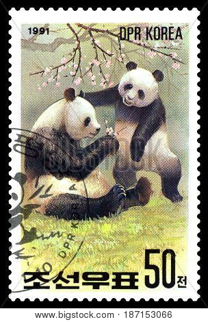 STAVROPOL RUSSIA - May 14 2017: A Stamp sheet printed in North Korea shows Giant Pandas with cub series Pandas circa 1991
