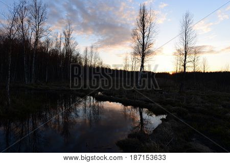 Sunset in the spring evening in a forest swamp the sun sets behind the trees