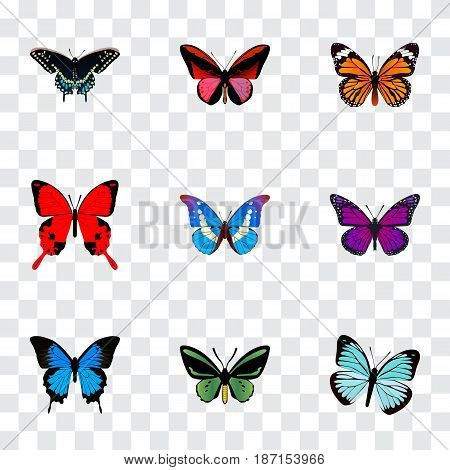 Realistic Common Blue, Morpho Hecuba, Monarch And Other Vector Elements. Set Of Beauty Realistic Symbols Also Includes Bluewing, Green, Sky Objects.