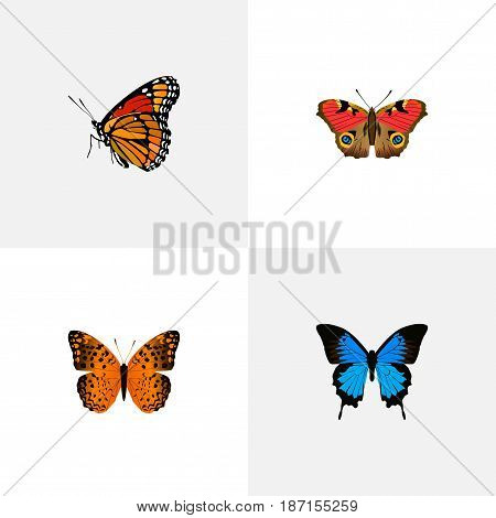 Realistic American Painted Lady, Milkweed, Common Blue And Other Vector Elements. Set Of Moth Realistic Symbols Also Includes Blue, Orange, American Objects.