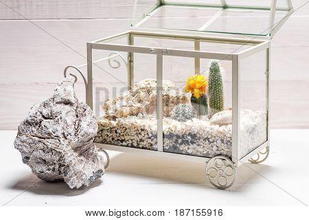 Wonderful Terrarium With Cactus And Piece Of Desert