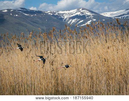 Stilts On Lake Prespa In Nortern Greece