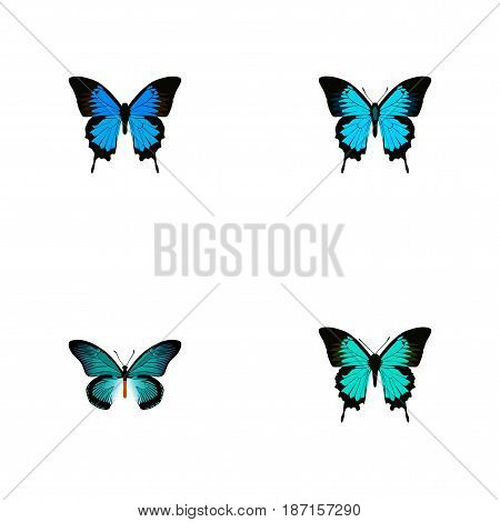 Realistic Copper, Papilio Ulysses, Common Blue And Other Vector Elements. Set Of Butterfly Realistic Symbols Also Includes Cypris, Hairstreak, Butterfly Objects.