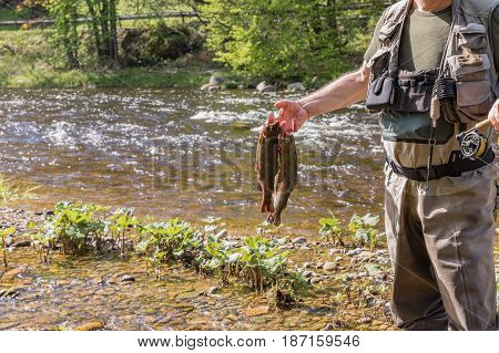An unknown fisherman caught three trouts in his hand. Detail of hand and rod. River Otava Czech Republic.